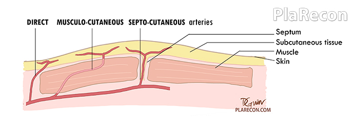 Arterial Supply skin Pic (Plastic Surgery)